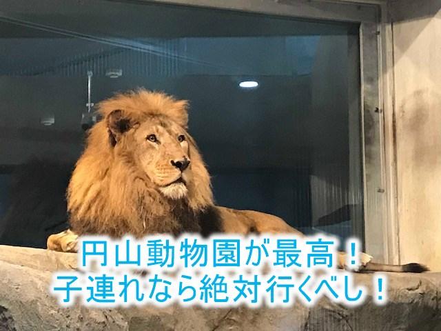 北海道旅行記!円山動物園は札幌からもアクセス近くておすすめ!シロクマのトンネルが凄い!
